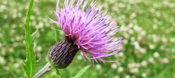 公園で見つけた花の写真